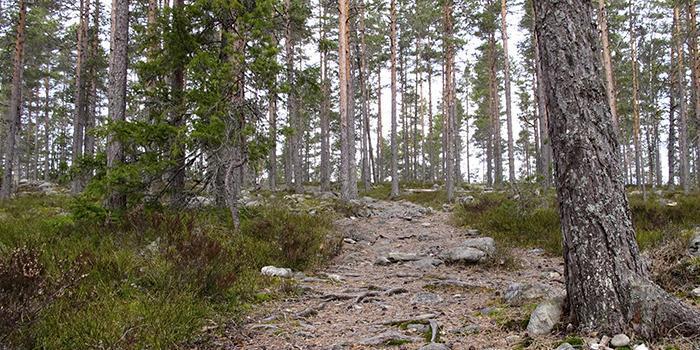 Kuvataide Suomessa